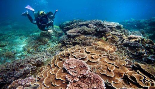 日本から予約できる!青い珊瑚礁の無人島1日ツアー